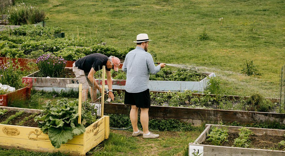 To menn som vanner og planter grønnsaker på Fornebu.