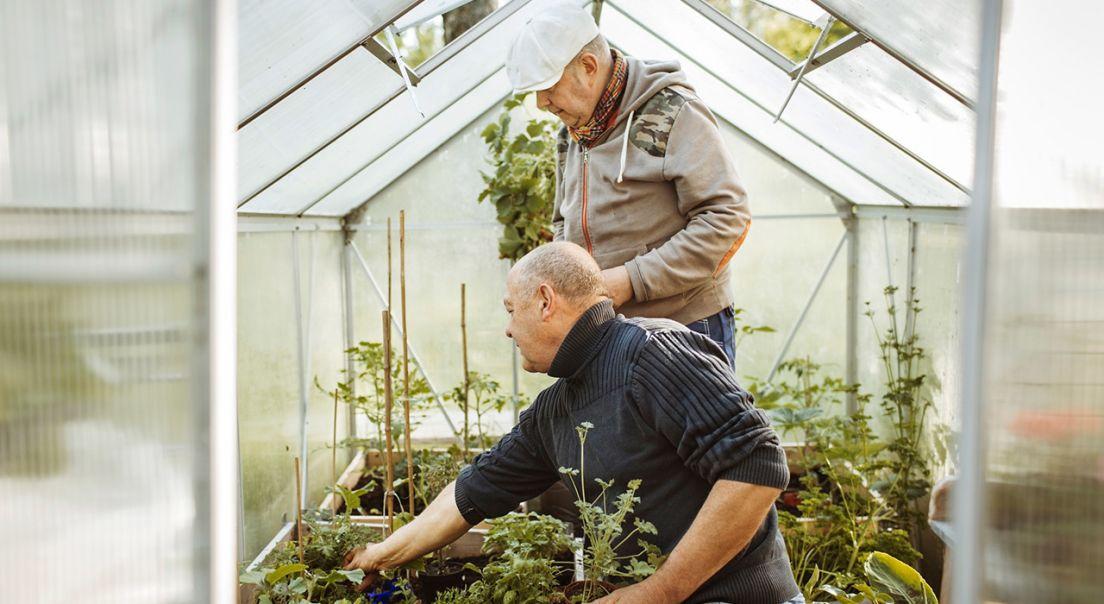 To eldre menn med planter i et drivhus