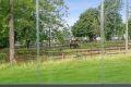 Flott utsyn til grønne fellesarealer og hestene på Tveten gård