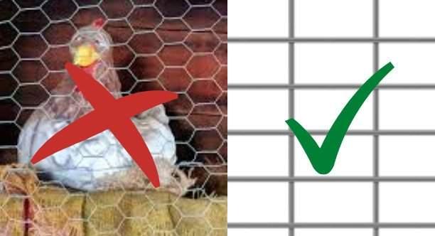 rabbit cage wire vs chicken coop