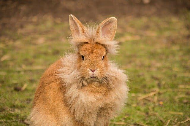 best rabbit harness