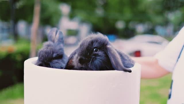 best rabbit safe shampoo