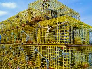 best rabbit cage