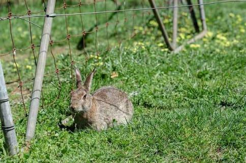 Found a lost rabbit