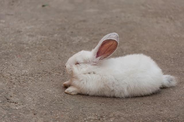 when do rabbits sleep
