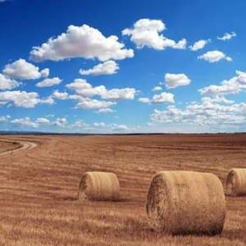what is rabbit hay
