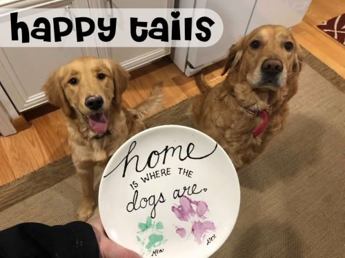 Happy Tails: To Go Kit