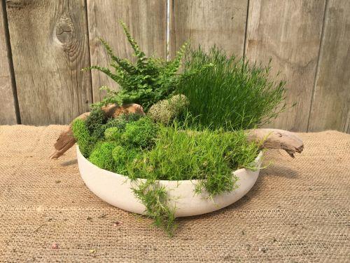 Tabletop Moss Garden DIY Kit $44.99