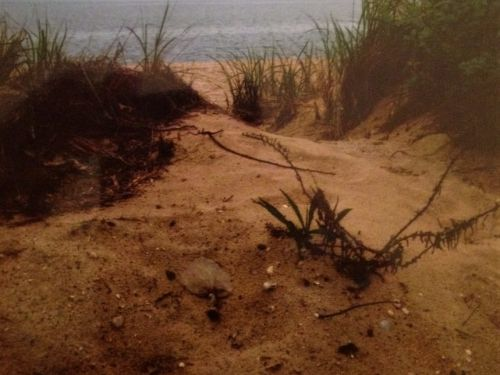 From Photo to Painting: Beach Scene $25 6pm Online Class
