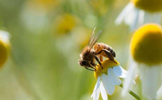 Environmental-Biodiversity