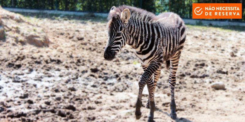 Zoo da Maia: Entrada para 2 Adultos | Admire a Natureza Selvagem no Norte!