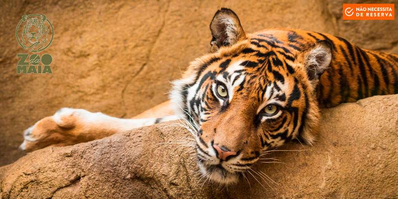 Zoo da Maia - Entrada de Adulto ou Criança | A Natureza e os Animais no Centro da Cidade do Porto!
