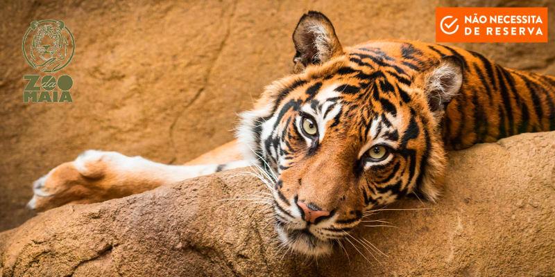 Zoo da Maia - Entrada para Adulto ou Criança   Porto