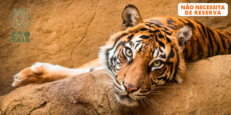 Zoo da Maia - Entrada para Adulto ou Criança | Porto
