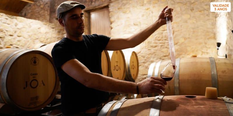 1 Dia com o Enólogo! Visita c/ Prova de Vinhos - 1 ou 2 Pessoas | Casa do JOA - Bragança