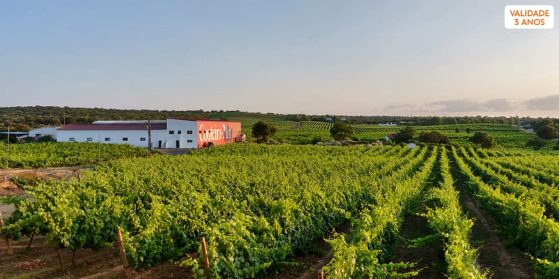 Visita à Adega da Herdade do Menir + Prova de Vinhos   1 ou 2 Pessoas   Couteiro Mor - Montemor-o-Novo