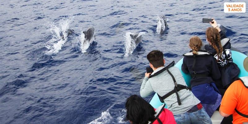 Passeio de Barco em Família para Observação de Cetáceos - 2 Horas | H2O Madeira - Calheta