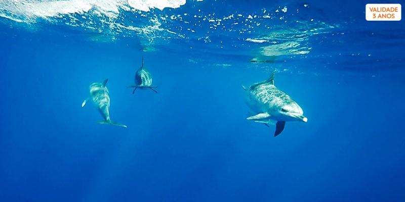 A Magia de Nadar com Golfinhos - 1 ou 2 Pessoas   Picos de Aventura - Ponta Delgada