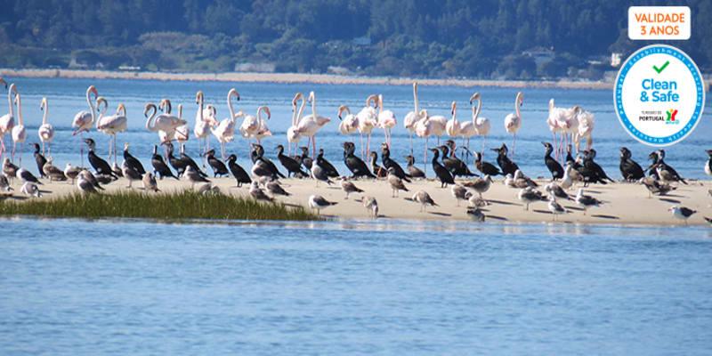 Observação de Aves na Reserva Natural do Estuário do Sado para Dois | 3 Horas