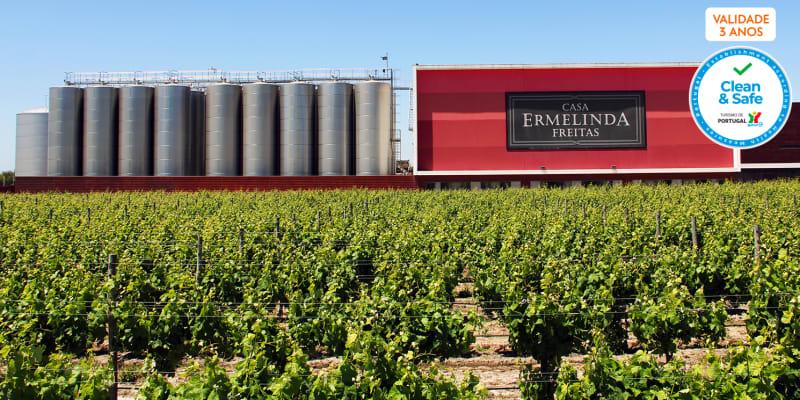 Visita às Vinhas & Prova de Vinhos c/ Degustação de Produtos Típicos - 1 ou 2 Pessoas | Casa Ermelinda Freitas