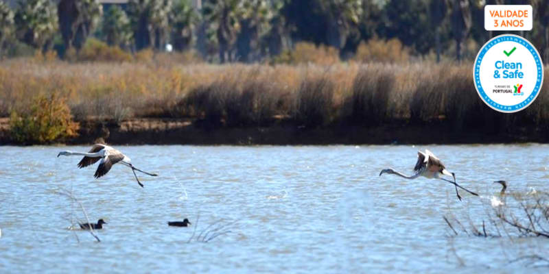 Birdwatching na Lagoa dos Salgados | 4 Horas na Natureza do Algarve com a Seacret Tours