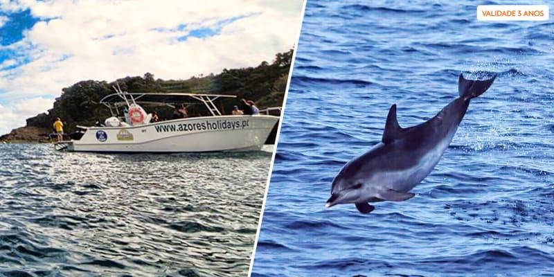 Observação de Golfinhos e Baleias no Mar dos Açores - 1 ou 2 Pessoas   Ponta Delgada
