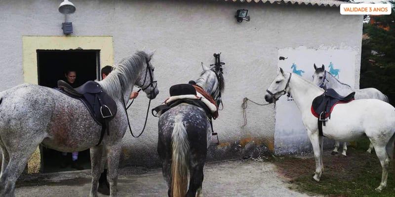 Aula de Iniciação à Equitação + Acesso à Piscina e Salão de Jogos   Quinta da Bacelada - Mêda