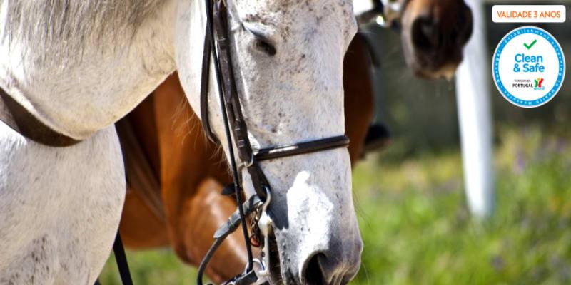 Baptismo de Cavalo ou Pónei com Visita a Quinta Pedagógica | Aveiro