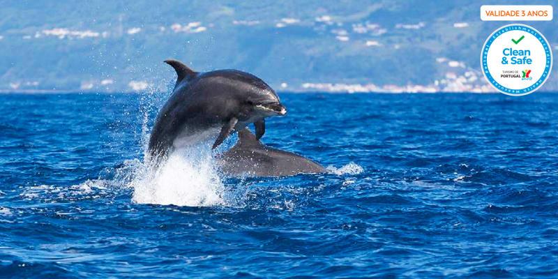 Observação de Golfinhos e Baleias na Ilha do Pico - 1 ou 2 Pessoas   Aqua Açores