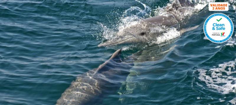 Passeio de Barco Rota dos Golfinhos para Dois | Sesimbra - Tróia | 2 Horas