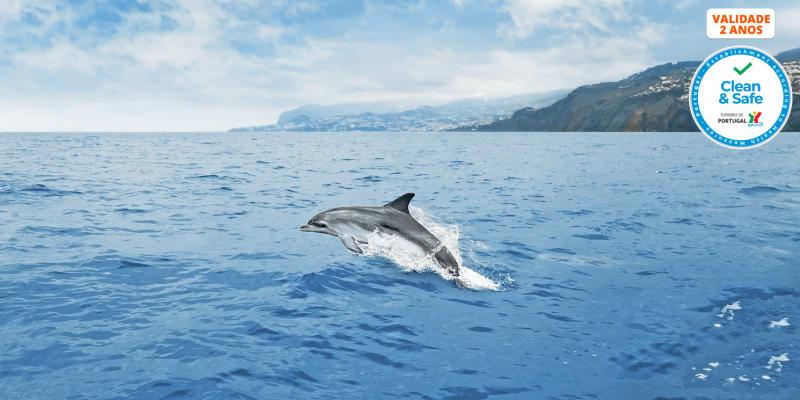 Observação de Cetáceos para 2 Pessoas com Passeio de Barco e Biólogo a Bordo | Madeira