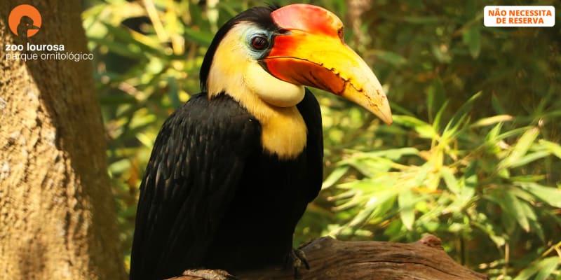 Zoo de Lourosa - O Único Parque Ornitológico do País! Entrada de Adulto ou Criança