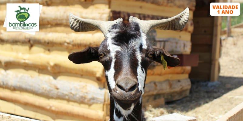 Entrada na Quinta Pedagógica Bambilocas c/ Alimentação de Animais | Bombarral