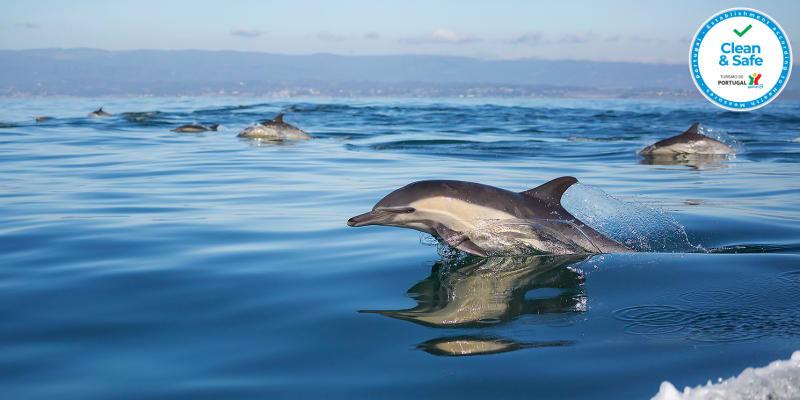 Passeio de Barco c/ Observação de Golfinhos e Baleias - 1 ou 2 Pessoas | Azul Diving - Machico