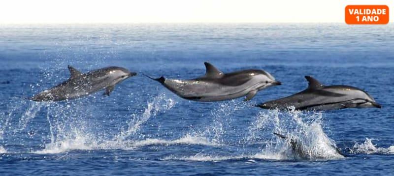 Rumo aos Golfinhos! Passeio em Speedboat para Dois | 3h | Olhão