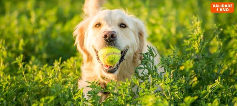 Curso de Cuidados e Procedimentos com Cães | Sociedade Digital | E-Learning 60 Dias