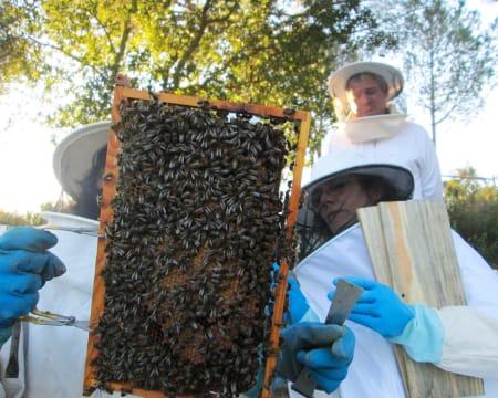 Experiências Imersivas no Habitat Natural das Abelhas para Dois | A Apicultora - Coruche