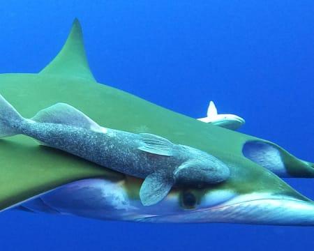 Snorkeling à Volta da Ilha de Santa Maria - Açores   Até 3 Horas   1 ou 2 Pessoas