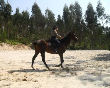 Passeio a Cavalo para 2 - Aveiro
