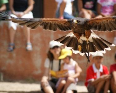 Experiência de Falcoaria | 1 Pessoa - 1h | Badoca Safari Park