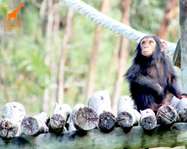 Safari VIP com Visita Guiada em Jipe Privado | 1 Pessoa | Badoca Safari Park