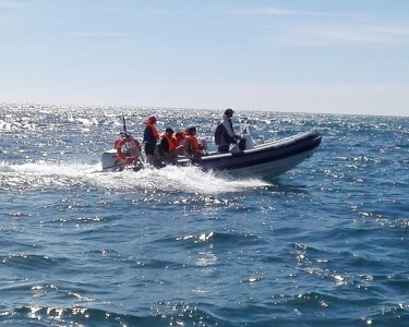 Passeio de Barco e Observação de Cetáceos em Porto Covo