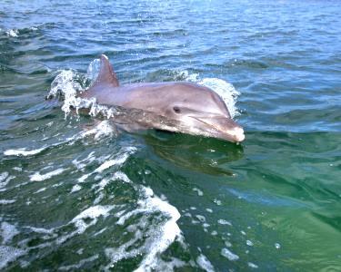 Passeio de Barco rumo aos Golfinhos em Speedboat a 2