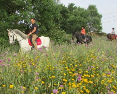 Passeio a Cavalo | 2 Pessoas - 1h | Quinta da Boa Vista
