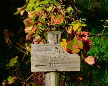 Percurso Pedestre em Colares com Prova de Vinhos para 2