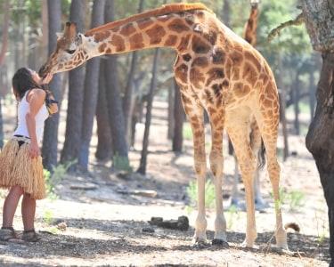 Experiência VIP de Encontro com as Girafas no Badoca Safari Park e 2 Entradas com Rafting Africano