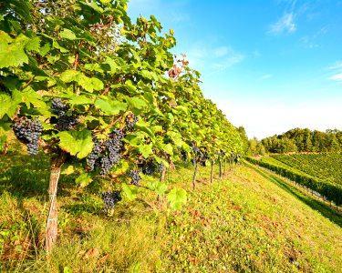 Prova de Vinhos, Azeite e Mel