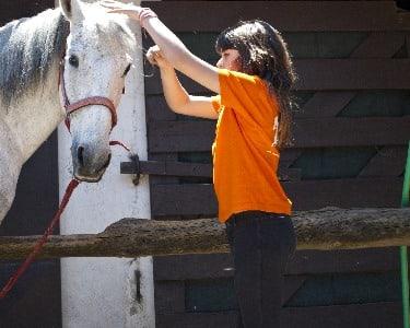 A Cavalo em Aveiro para 2
