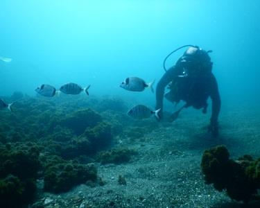 Baptismo de Mergulho na Piscina e no Mar