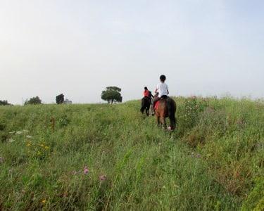Passeio a Cavalo para 2
